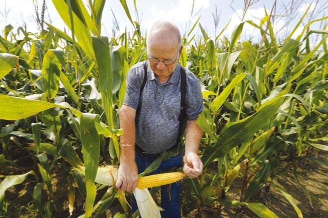 疫情令美國農民破產圖╱美聯社