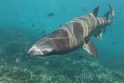 海底火山驚見罕見深海巨鯊 專家驚呼:只出現3次