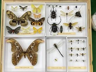 植物昆蟲也有戶口名簿!林試所「雙館齊下」典藏珍貴標本