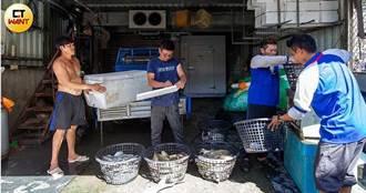 海上大戰2/風電毀海床魚屍遍布 討海人收入慘剩10分之1