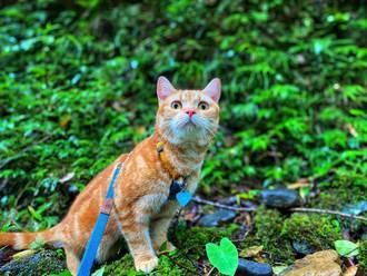 飼主驚魂墜谷 靈貓帶路神救援