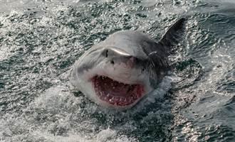 大白鯊飛躍海面4公尺 空中血口咬獵物畫面震撼