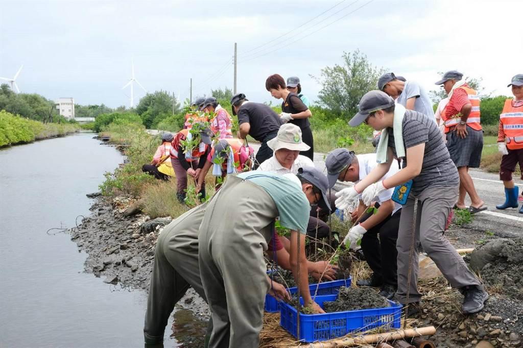 農委會林務局進行鹽溼地植栽復育,重建雲林縣海岸林貌。(張朝欣攝)