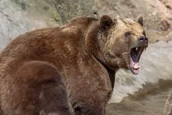 女到屋外講電話突遭巨熊猛擊 老公幼兒目睹血腥撕碎全程