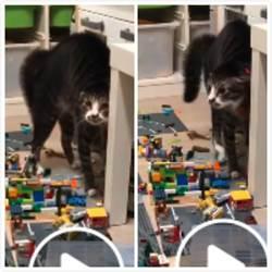 家貓嚇到炸毛閃屎 發出詭異低聲嘶吼 網:肯定不乾淨
