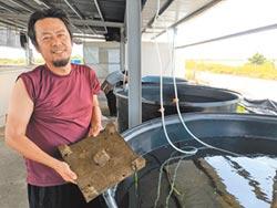 嗆館長 漁民發起萬人吃台灣蝦