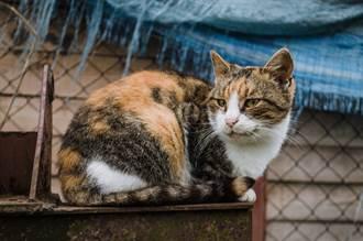 愛貓每天搞失蹤項圈突多紙條 打開驚見內幕:吃貨無誤