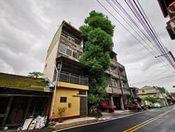 遜!屋前擺盆栽種小花?彰化二水阿嬤擺3百年6層樓高芒果樹