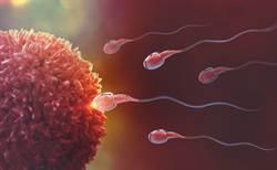精子品質太糟 研究證實:體重看得出來