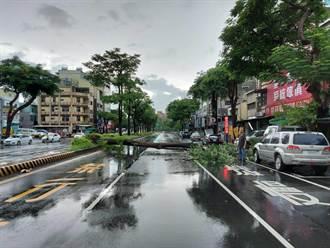風雨吹倒路樹 成大女學生遭砸傷當街嚇傻