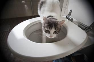 上廁所驚見馬桶蓋炸出「棉花」 舉肉球仰睡白肚被看光