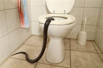 馬桶沖不了開水箱檢查 驚見4綠長蛇盤踞狂蠕動