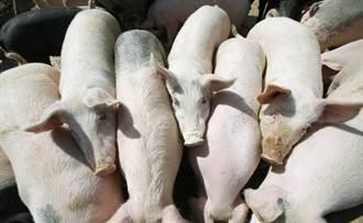 瘦肉精美豬進口 網友嗆不吃的都是韓粉
