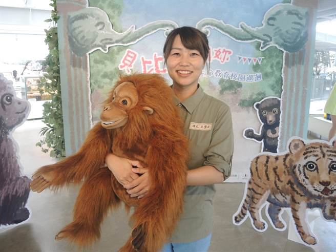 竹市立動物園日籍員工岡元友實子將帶著紅毛猩猩貝比的故事走進校園,開展動物生命教育。(邱立雅攝)