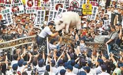 瘦肉精豬最新民調出爐 泛綠民眾反應跌破眼鏡
