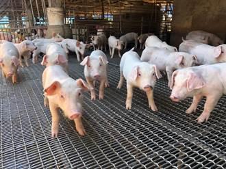 高雄農業局致力穩定豬價 業者盼作好識別標誌