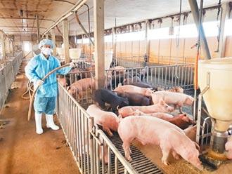 說好的增養外銷 豬農嗆綠說瞎話