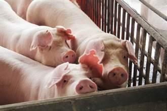 因應美豬進口 嘉縣將製作國產豬肉標章