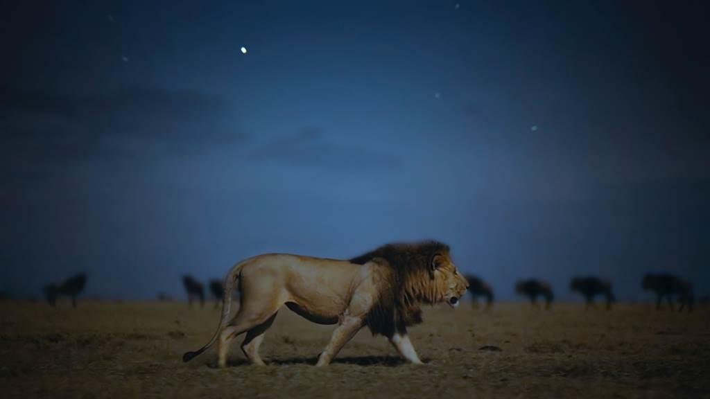 全新紀錄片《Earth At Night In Colour》將於Apple TV+播出。(蘋果提供/黃慧雯台北傳真)