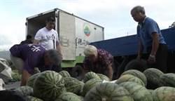 4000顆西瓜遭棄單老農欲哭無淚 花蓮人愛心爆棚1天買光