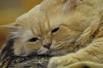 愛滋貓沒人領養每天皺眉 被抱回家終於笑了1年後變超萌