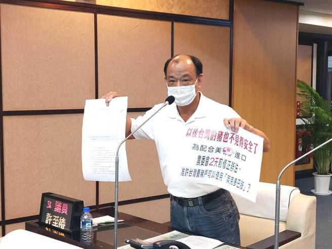 國民黨籍台南市議員許至椿出示農委會的公告,質疑國產豬是否也可開放使用萊克多巴胺?(洪榮志攝)