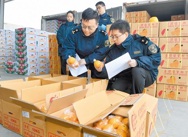 福建平潭港區海關人員在檢查台灣水果。(新華社資料照片)
