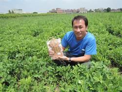 王國輝傳承世代產業 發揚有機花生栽種