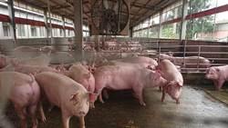 《科學人》撤萊豬廣告 民眾曝心聲:恐毀專業信譽