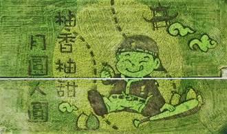 苑裡稻田彩繪二期作亮相 棒球小子品柚慶中秋超吸睛