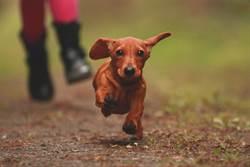 因疫情被迫分離 愛犬穿越1萬6千公里終與主人團圓