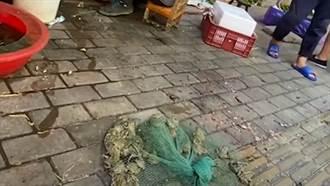 武漢市場再爆販賣「野生青蛙」 網怒譙:好了傷疤忘了痛