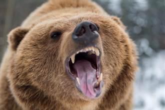 野生熊爽逛超市 一週來兩次「零食拿了就嗑」