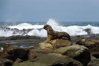 「海豹岩」納自然紀念物有譜?基市組委員會審議提報資格