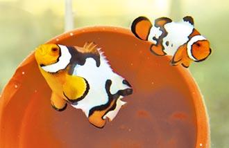免施毒捕魚 人工繁殖護生態
