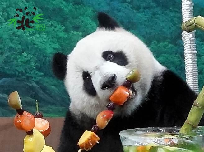 大貓熊原本是屬於食肉目動物,但經過演化已經變成以竹子為主食的植食性動物,圖為正在大啖水果的圓仔。(圖/臺北市立動物園提供)