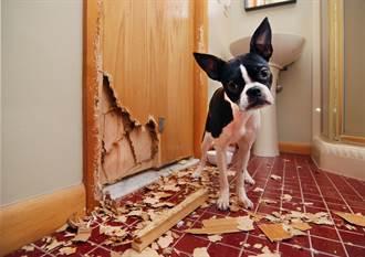 離開10分鐘浴室門被「加裝狗洞」汪星人無辜探頭:去哪了