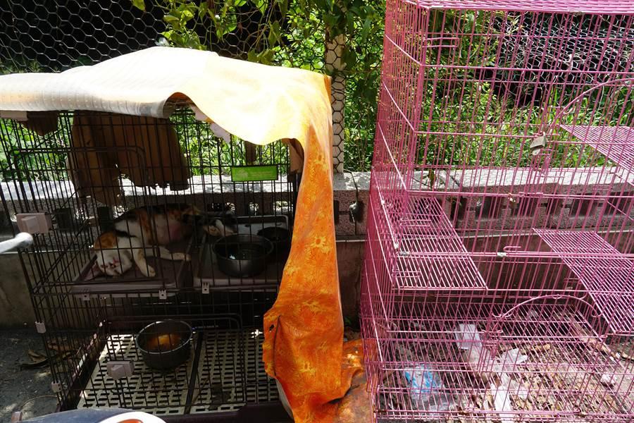 養有比特犬的客貨車旁,還由其他圈養動物籠子。(黃國峰攝)