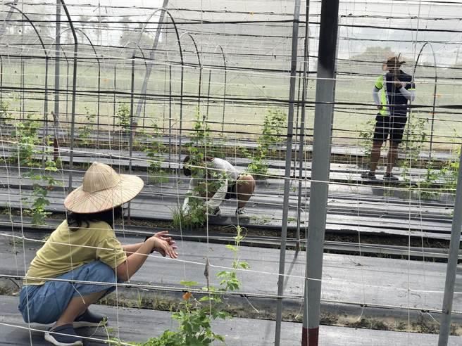 學員們在體驗過程中,了解農事學問多。(李宜蓉提供/張毓翎嘉義傳真)