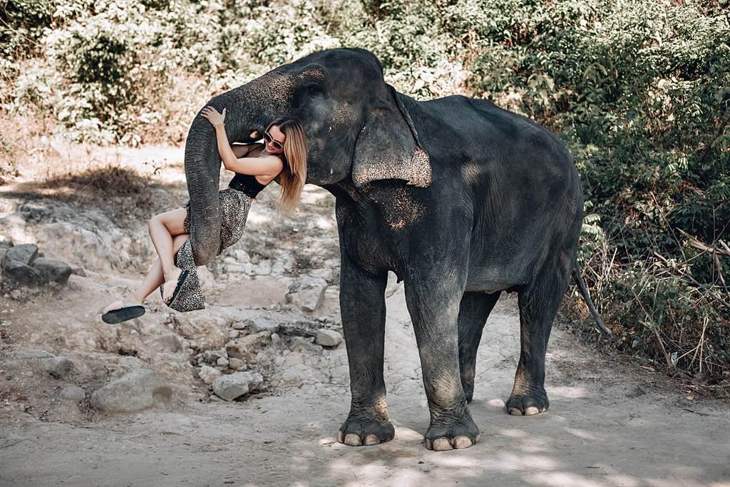 大象半路長鼻狂捲飼育員 攔截真相暖哭眾人 (示意圖/達志影像)