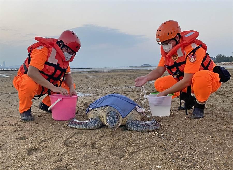 今年第1起紀錄 保育海龜迷途擱淺小金門 - 生活