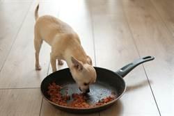 主人過世沒人發現愛犬吃腐屍2周 內疚4年才走出陰霾