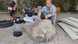今年以來最大 台東獵人摘下60公斤虎頭蜂巢