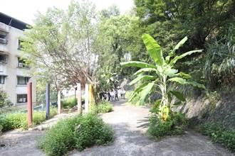 荒廢空地養蚊數十年 基隆人盼改設休閒空間