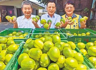 疫情不利外銷 檸檬價跌逾3成