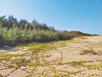 復育有成 好美里防風林增0.15公頃