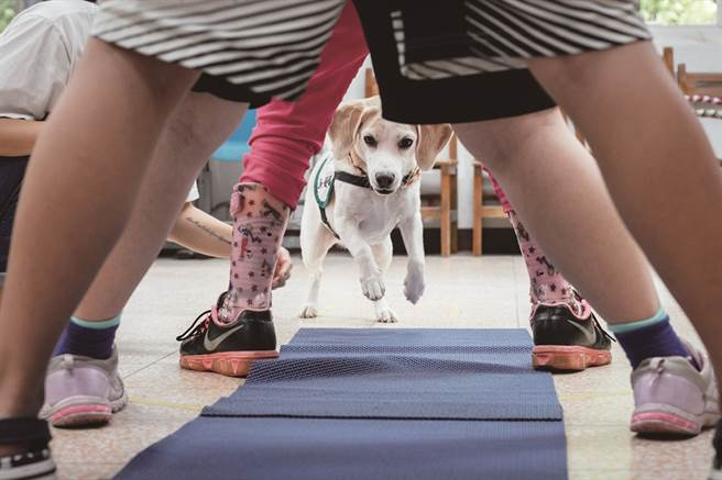 透過與治療犬一起玩呼拉圈、鑽山洞等互動遊戲,訓練孩子肢體動作的穩定度。(圖/蔡嘉瑋攝)