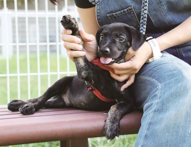 收養流浪貓犬不僅是給浪浪們一個家,也是給忙碌的現代人一劑心靈處方。( 圖/浪浪別哭)