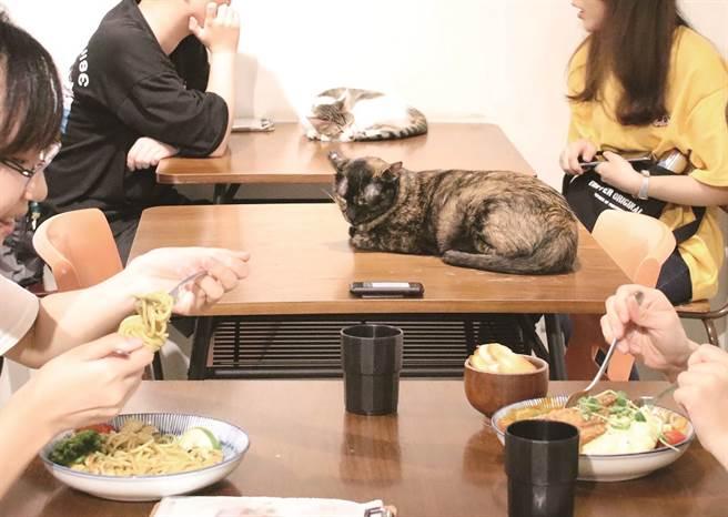 「浪浪別哭」不只是間咖啡廳,顧客在此的消費也能幫助流浪動物。(圖/浪浪別哭)