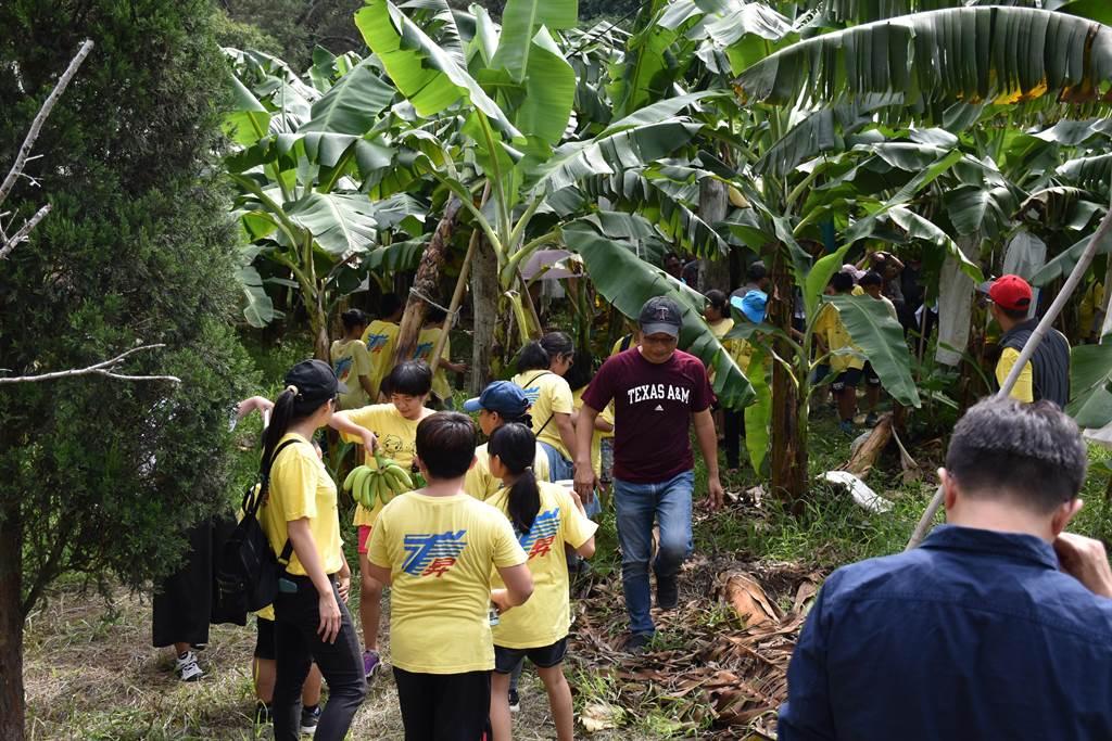 龍昇國小全校師生9日下午前往龍昇村秋水自然農場了解香蕉是如何長出來的?(謝明俊攝)